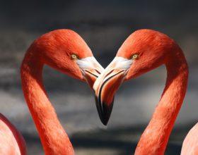 Tauro: Claves para el amor en este nuevo ciclo